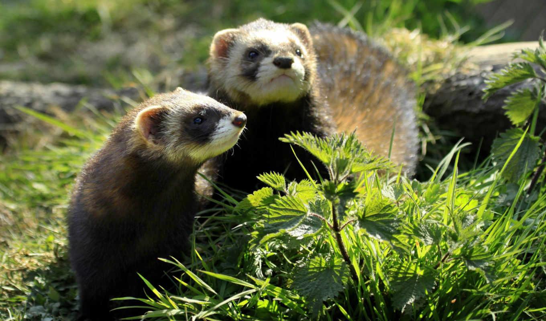 животные, many, wild, сладкое, нов, домашние, смотреть, всегда,