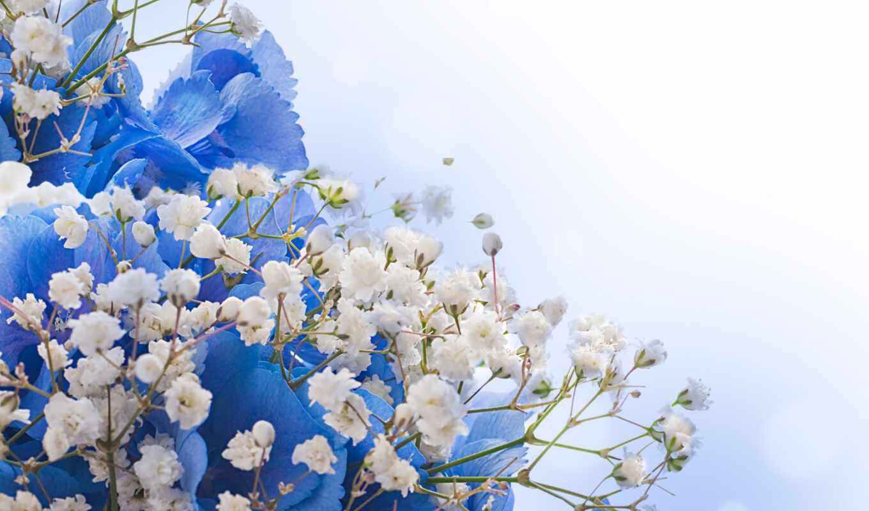цветы, белые, синие, клипарт, весенние,