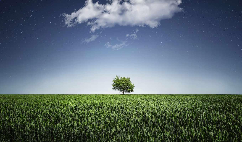 дерево, зелёный, одиночка, amazing, desktop, янв, free, facebook,