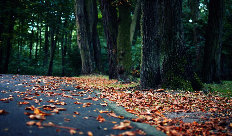 природа, парк, листва, асфальт, leaves, road, горизонтали, вертикали, имеет, картинка, деревья, осень, duvar, yolda,