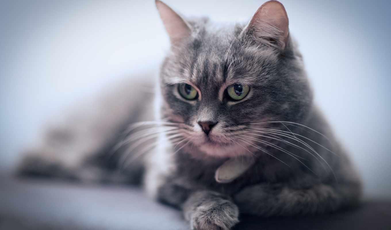 кот, отдых, июня, морда,