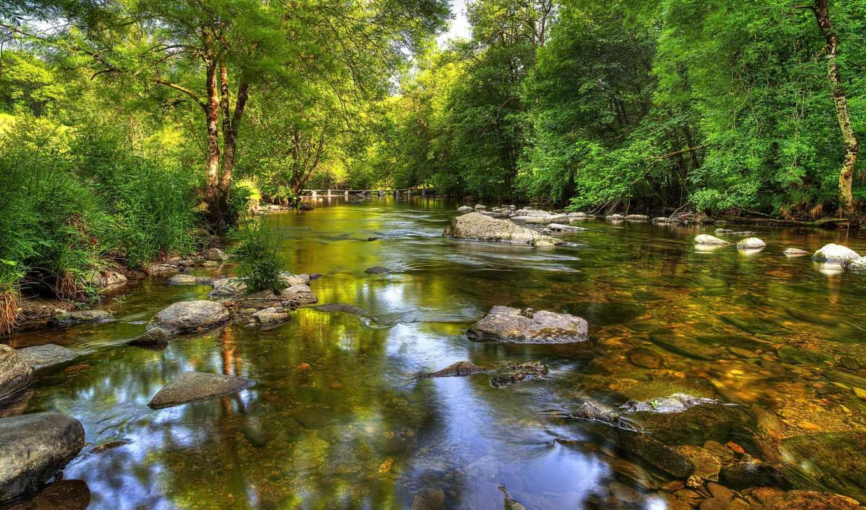 landscape, эксмур, пейзажи -, деревья, шаги, река, тарр,