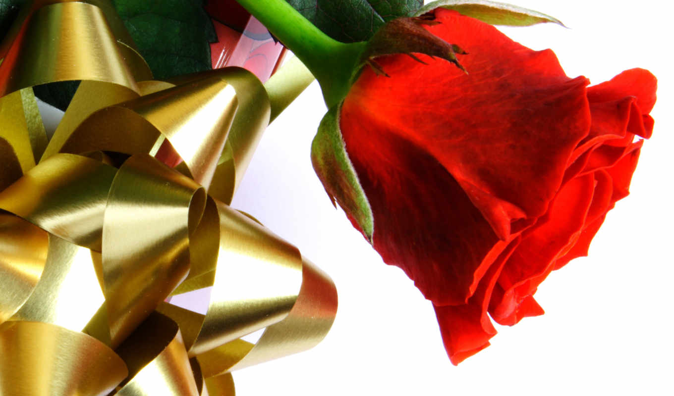 love, роза, red, roses,
