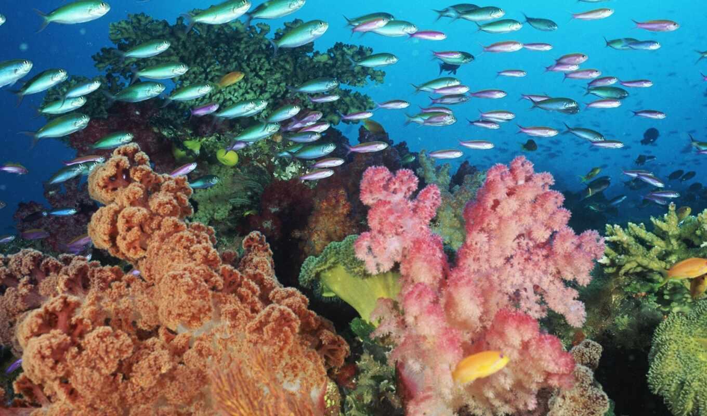 fish, marine, миро, underwater, water, eilat, animal, риф