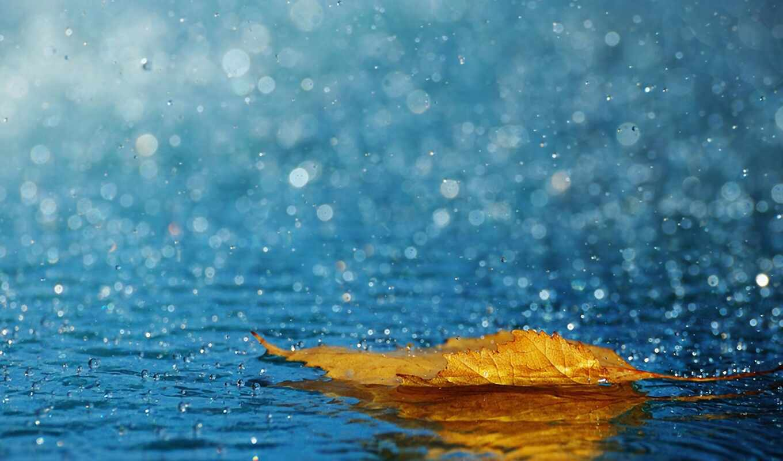 лист, капли, осень, дождь, вода, макро,