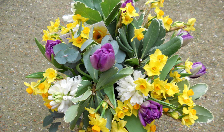 цветы, нарциссы, букеты, букет,