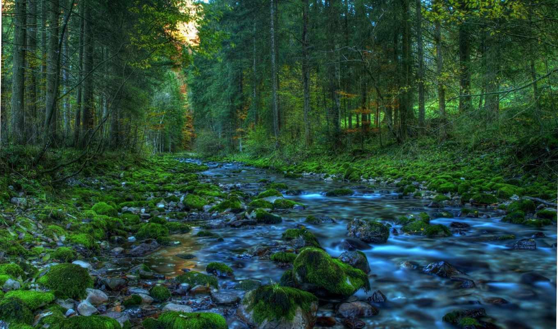 ручей, лесу, графика, категория, весна, природа, добавлено,