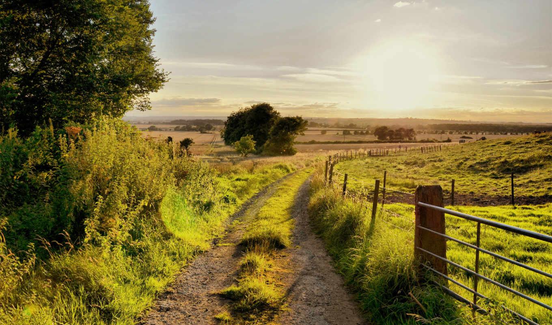summer, дорога, зелёный, забор, деревья, трава,