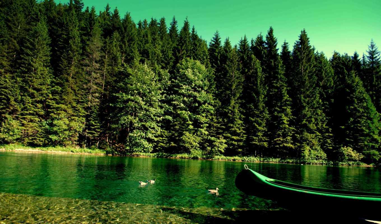 лес, природа, река, лодка, утки, природы,