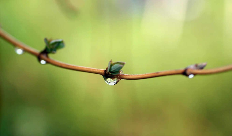 роса, drops, весна, природа, branch, water, mac, планшетный, mobile,
