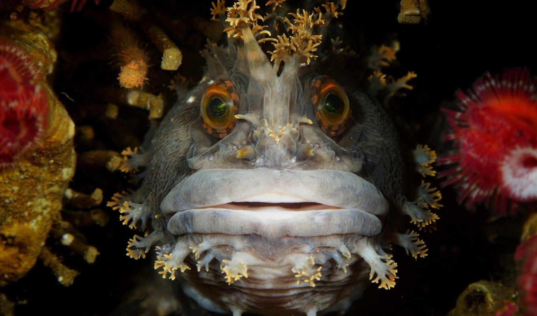 underwater, photography, фотоконкурса, море,