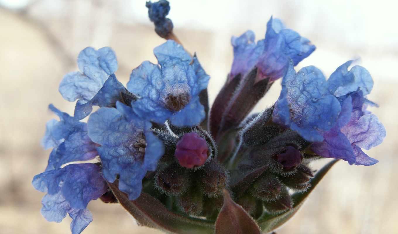 flowers, plants, seed, wallpaper, widescreen,