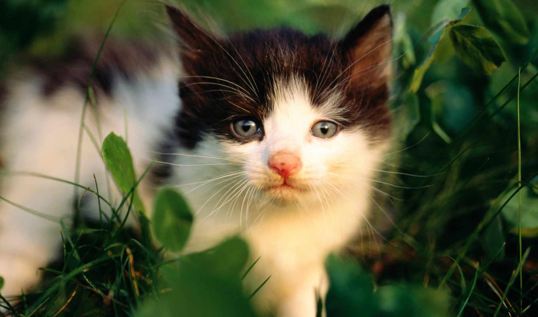 обои, обоев, весь, котята, фото, экрана, тема, смо