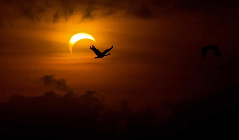гуси, тьма, свет, солнце, лебеди, вечер, птицы, solar, eclipse, resolution,