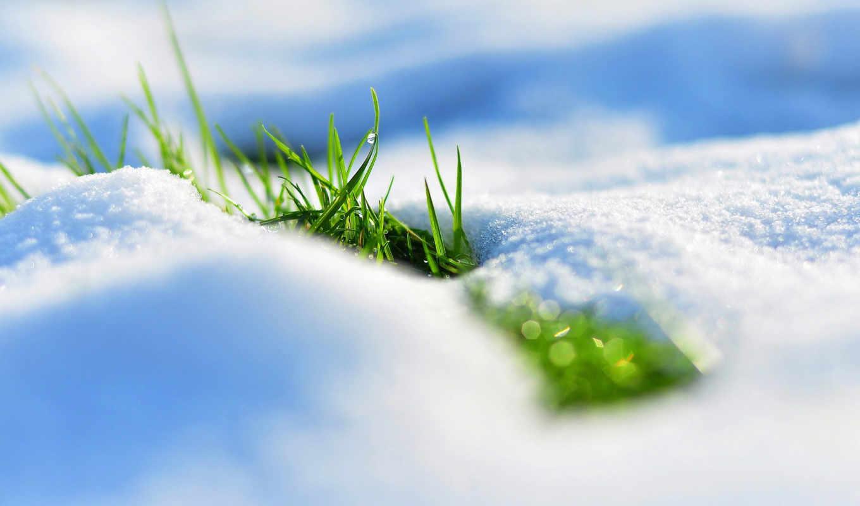 весна, снег, трава,