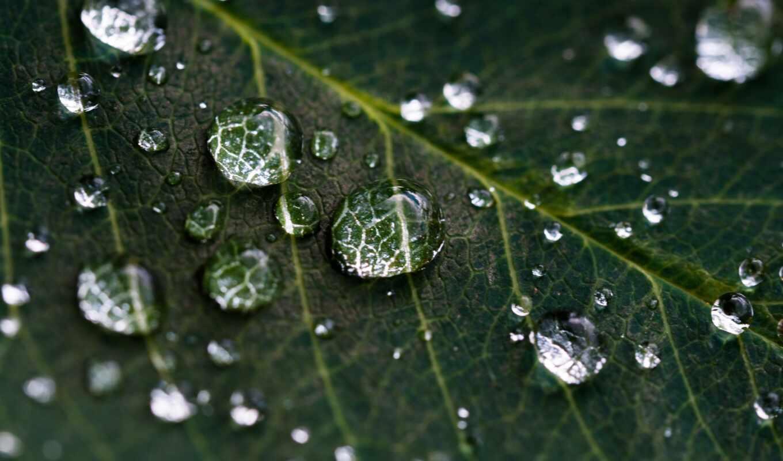 life, цитата, дождь, bring, makryi, water, marley, боб, drop