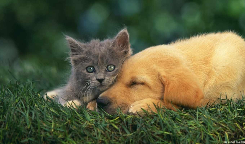 щенок, котенок,