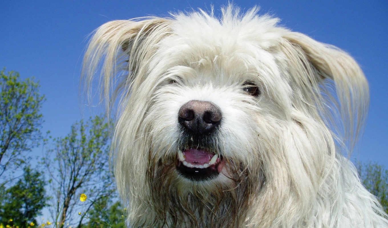 free, собака, images, size, animals, resolution, категория,