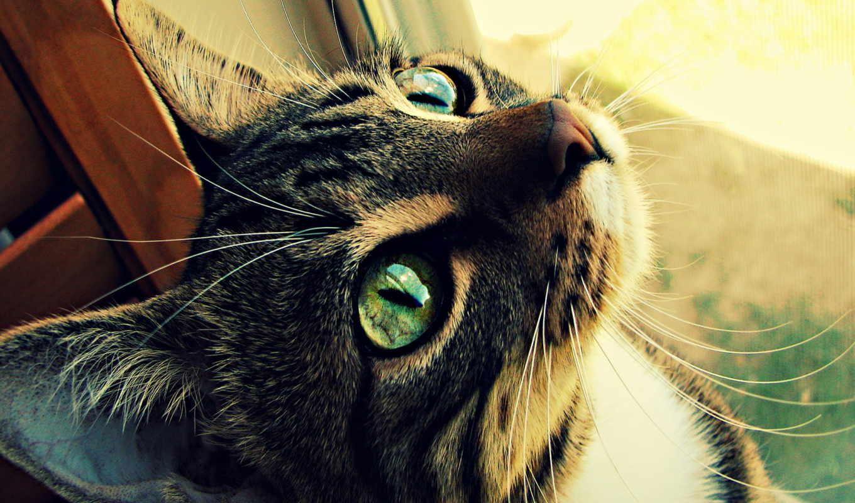 зелёный, eyed, кот, eyes, zhivotnye,