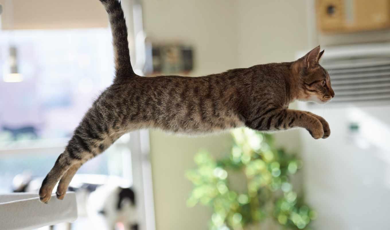 прыжок, кот, кота, кошки, youtube, прыжке, неудачный,
