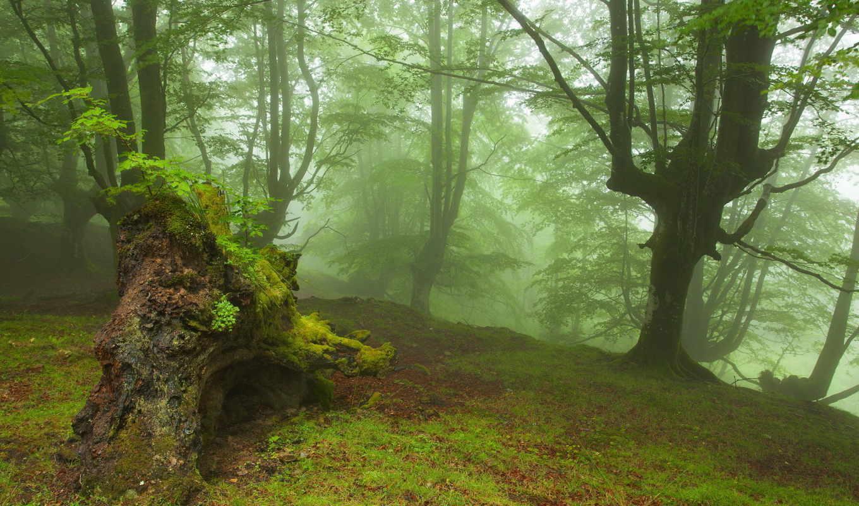 лес, природа, деревья, туманный, страна, orman, басков, ороско, испания,