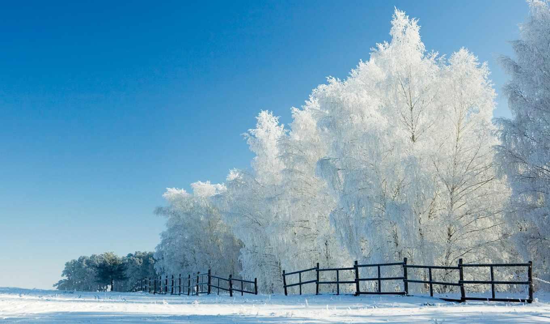 лес, winter, утро, деревья,