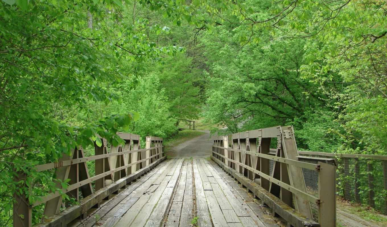 мост, you, лес, free,