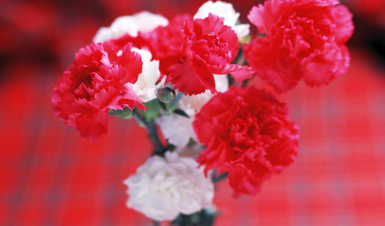 цветы, самая, mobile, возможность, закачки, гвоздики, качественная, форматы, коллекция,