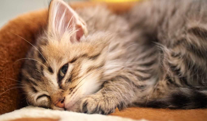 страница, глаз, кот, котенок, спит, zhivotnye, установить, лежа,