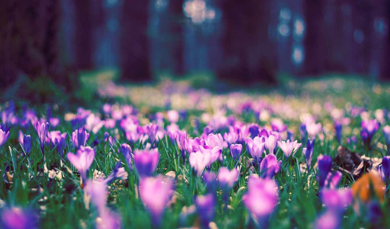 поляна, цветы, деревья, лес,