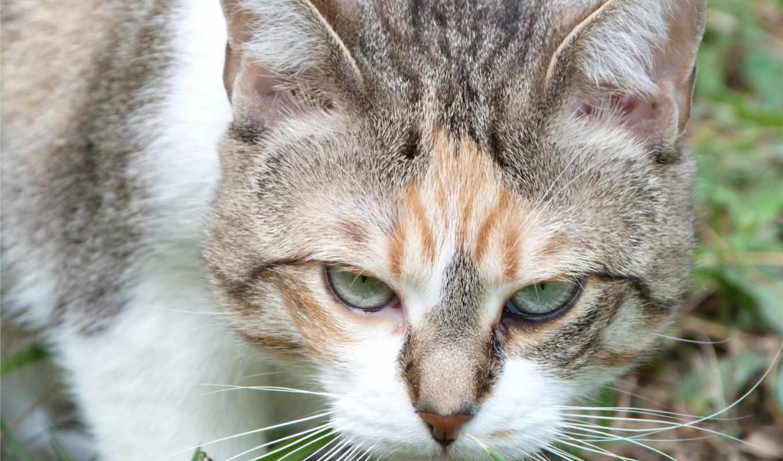 angry, кот, this, изображение, pin, video, pinterest,