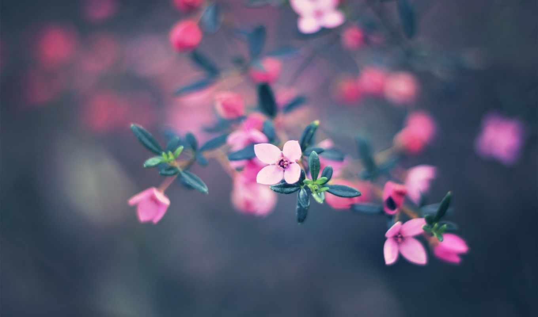 цветы, природа, боке, flowers, bokeh, краски, тона,