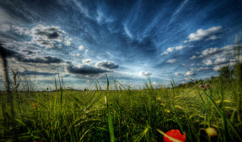 природа, поле, поля, маки, пейзажи -, трава, цветы, макро,