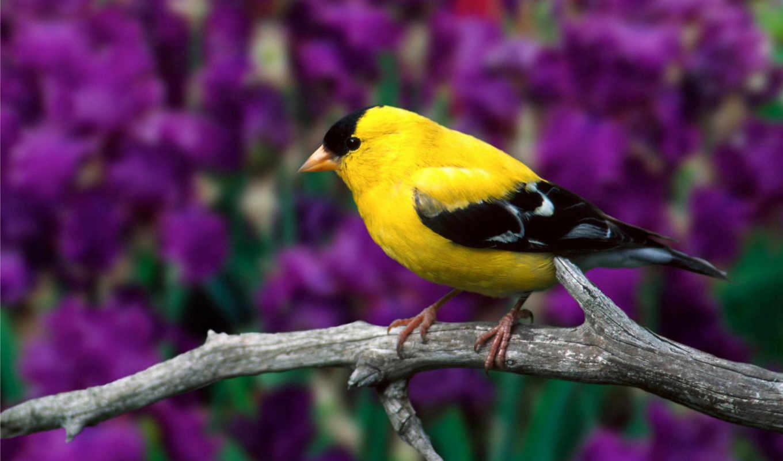 качестве, сухая, без, птица, высоком,