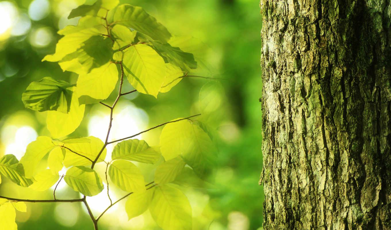 nature, free, без, листву, свет, регистрации, сквозь, www, airena, landscape, leaves, green,