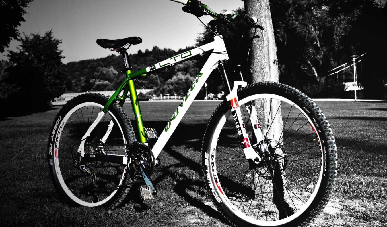 велосипед, горный, чёрно, белый, дерево, поделиться, вернуться,