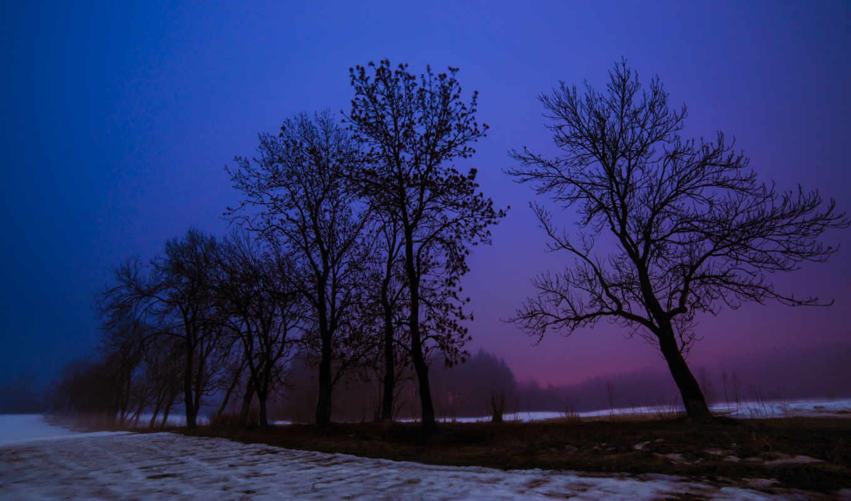 tree, пейзаж, earth, поле, пейзажи, ночь,