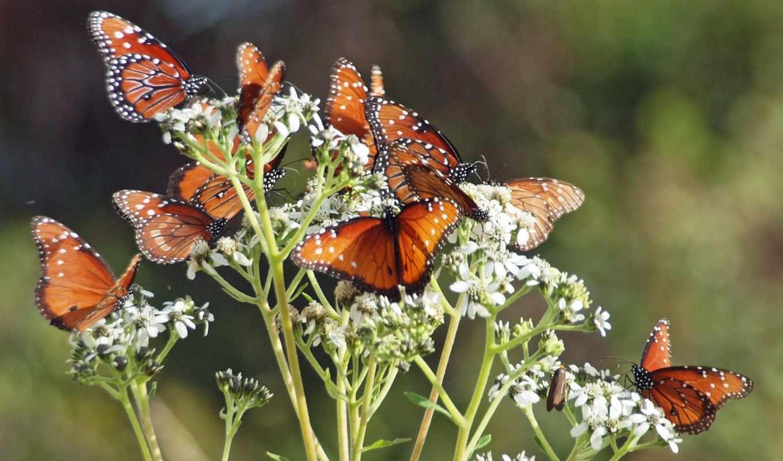 бабочки, цветы, весна, природа, насекомые,