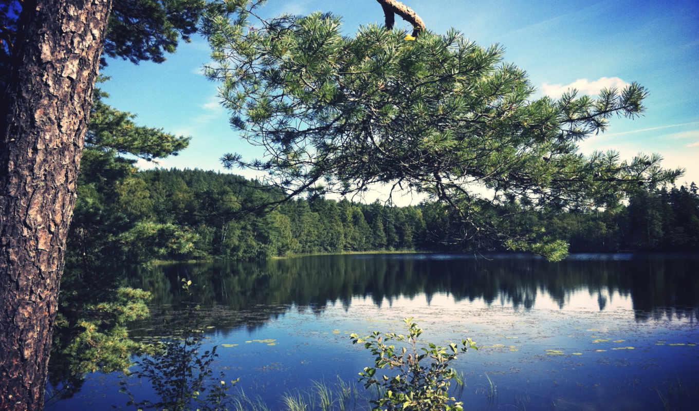 branch, сосны, озеро, sony, xperia, со, озером, pine, лес,