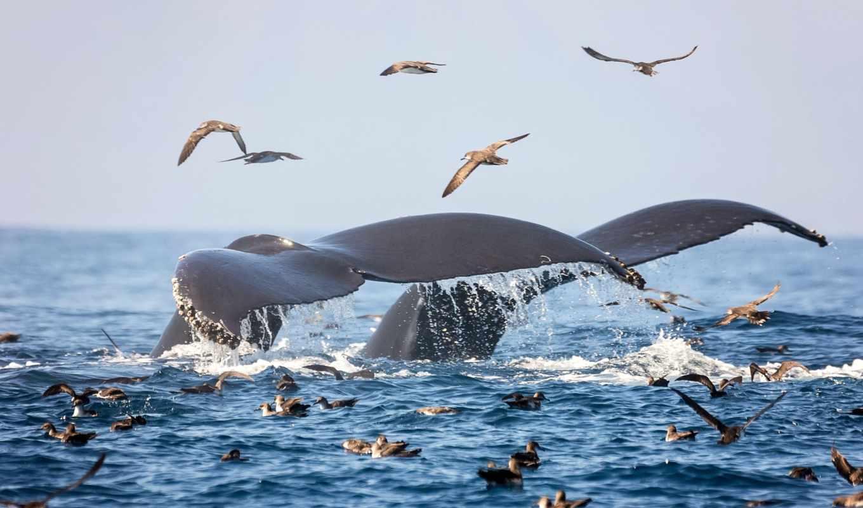 desktop, найти, other, whales, ocean, contact, seagulls, free, россия,