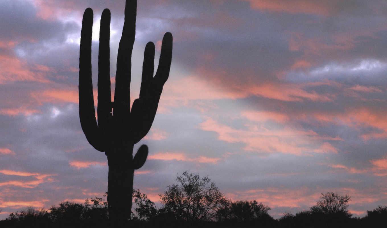arizona, saguaro, cactus, giant, massage, desktop,