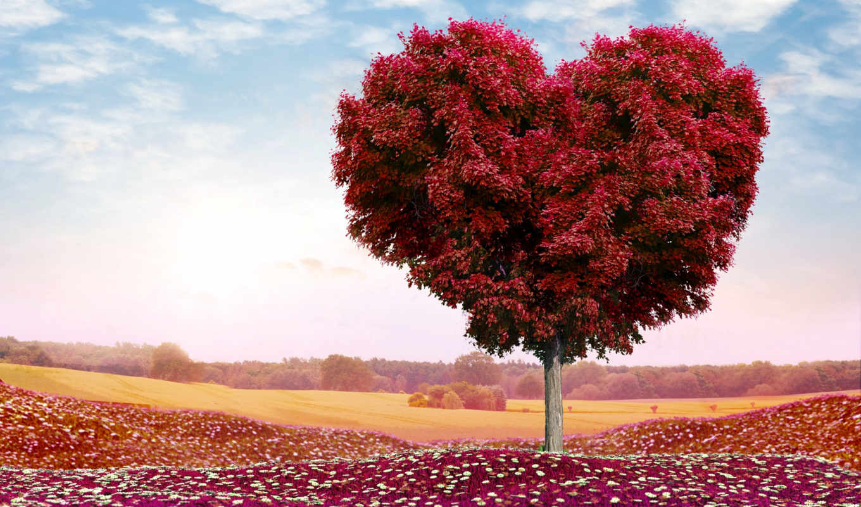 дерево, сердце, поле, photoshop, день, романтика, святого, ipad, cvety, love,
