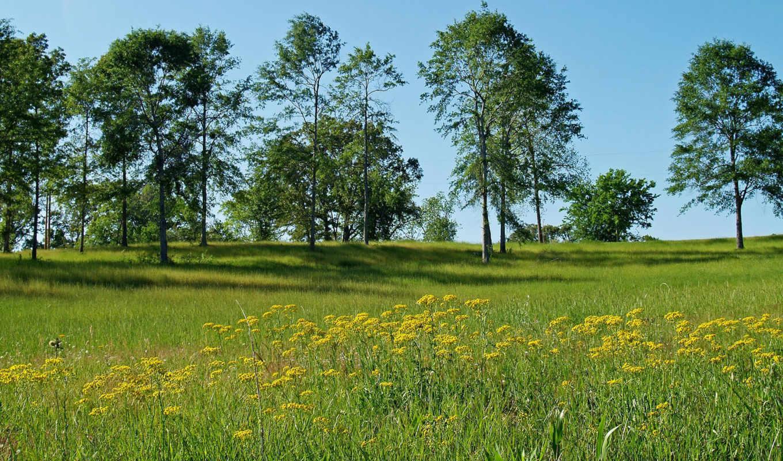 flowers, field, wallpaper, priroda, cxxe, nature, wallpapers, and, desktop, природа, walpapers,