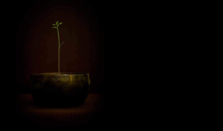 вазон, цветок, разное, картинка, iphone,