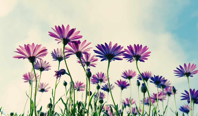 cvety, все, амин, полевые, дальше,