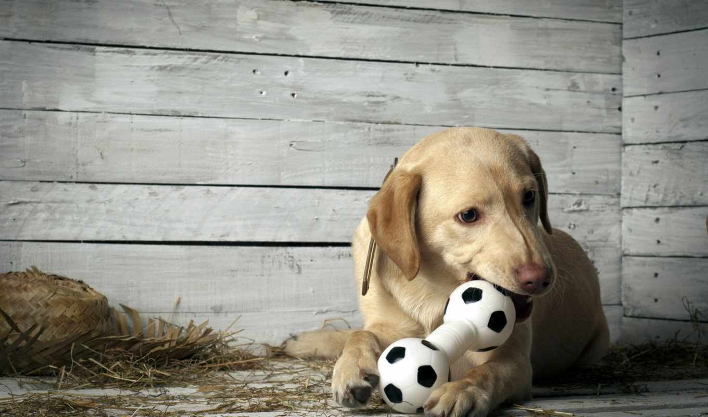 собака, dogs, pinterest, выход, дивана, собака, моя, узнаете, щенят,