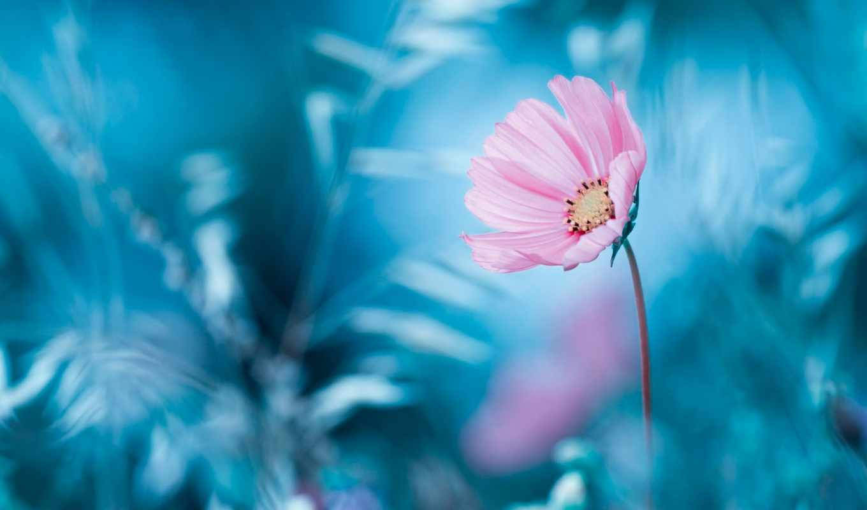 цветы, обоях, ago, добавлено, год, нов,