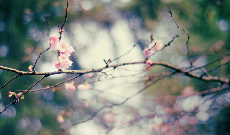 bokeh, весна, ветки, цветы, нояб,