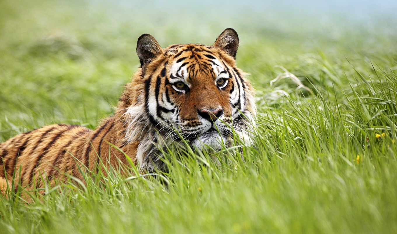 zhivotnye, животных, африки, дикие, детей, африка,