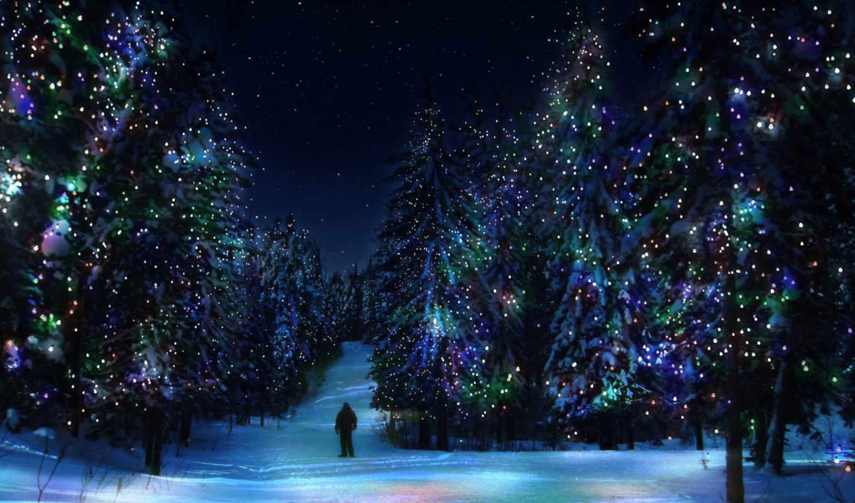 new, год, лес, winter, елки,